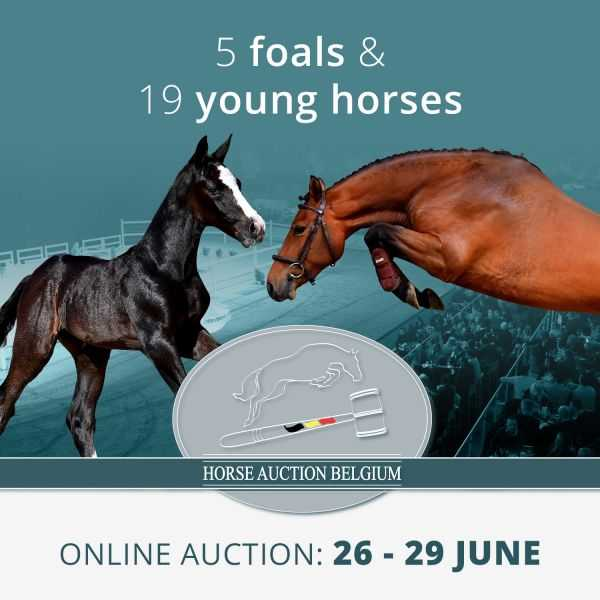 Spring Auction 2020